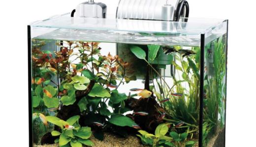 熱帯魚飼育に最適な水槽のサイズと選び方について徹底解説!